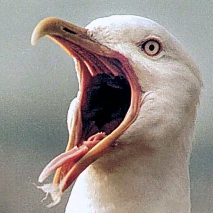 The Secret to Stopping the Seaside Savage Seagull