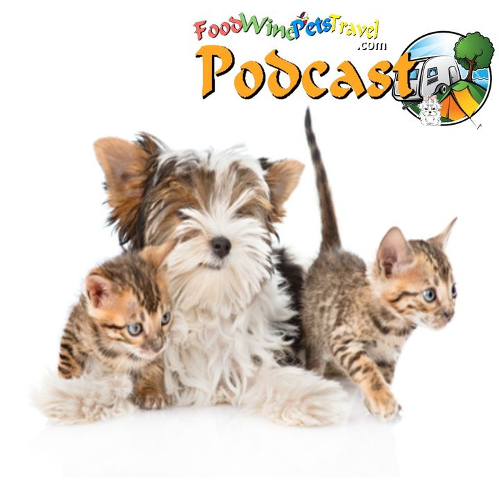 Would You Know When Your Pet Was Unwell? - Dr Jo Sillince