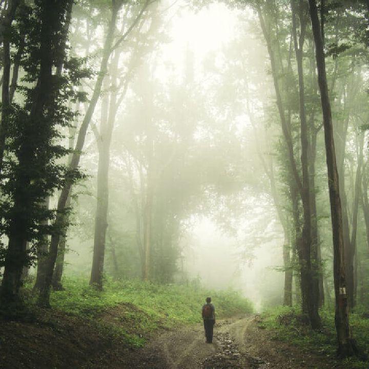 Episode 6 - प्रेत Hoia-Baciu Forest Romania
