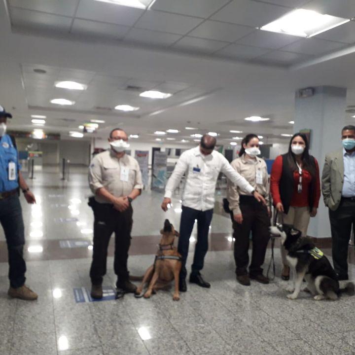 Perros rescatados de albergue son traídos desde Guatemala para detectar plagas en el AILA