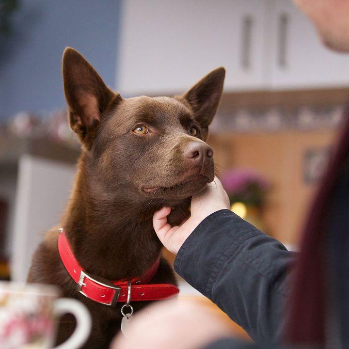 KOKO: A RED DOG STORY - Felix Williamson Interview