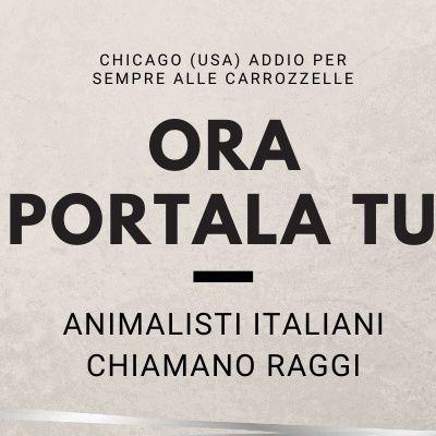 """Stop alle carrozzelle a Chicago (USA). Animalisti Italiani chiamano Raggi """"Prendiamo esempio"""""""