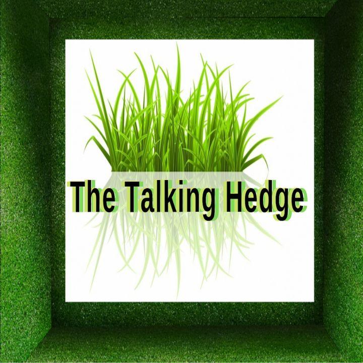 Talking Hedge