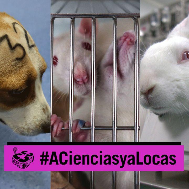 Experimentación con animales. El caso Vivotecnia y muchos más (A CIENCIAS Y A LOCAS - CARNE CRUDA #878)