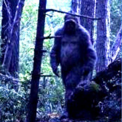 Homeless Couple Calls 911 on Bigfoot ACTUAL AUDIO