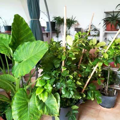 Le piante in inverno.