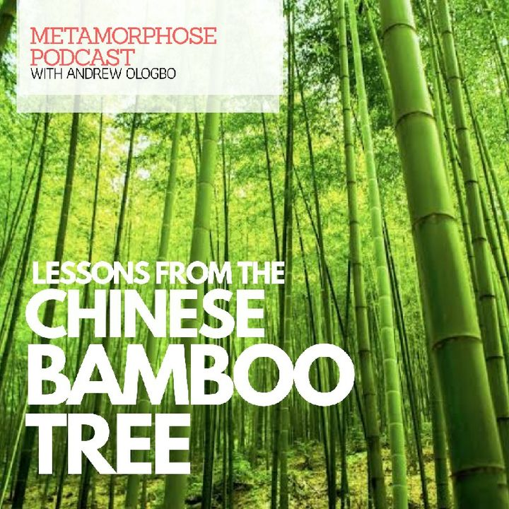 """LESSONS FROM THE CHINESE BAMBOO TREE"""