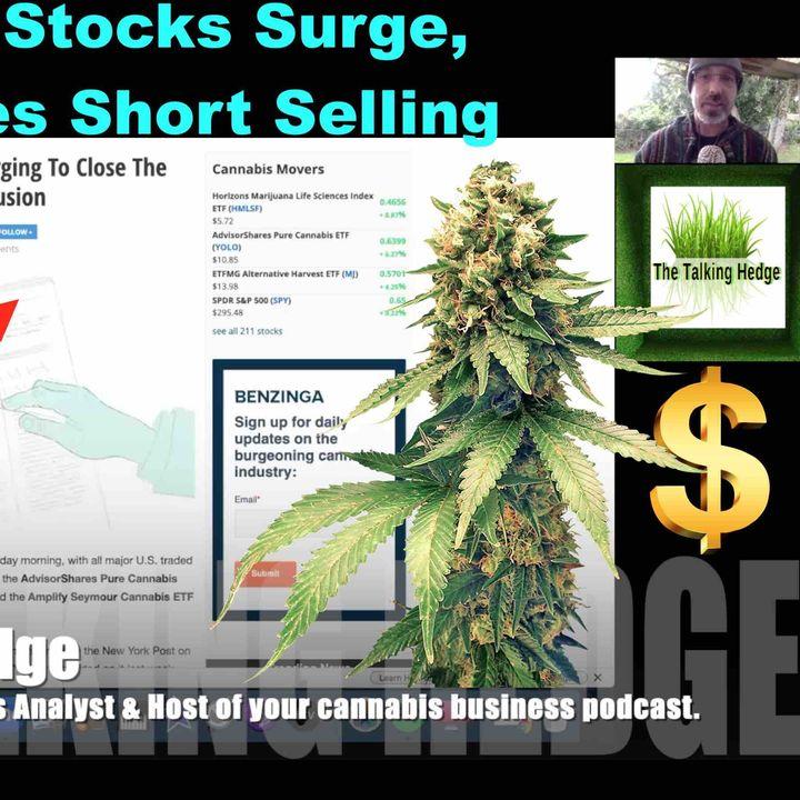 Cannabis Stocks Surge, But So Do Short Sellers