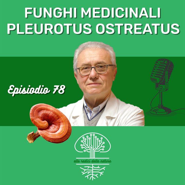 Funghi Medicinali: PLEUROTUS OSTREATUS
