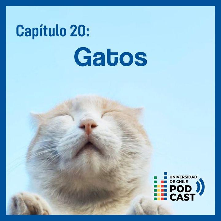 Especial: Gatos