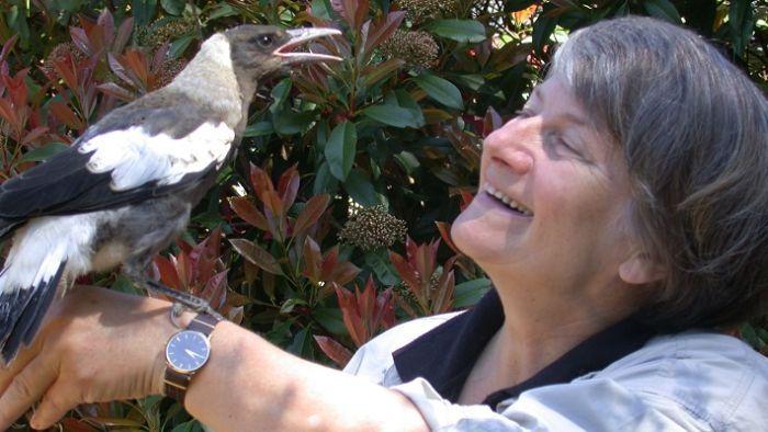 The blue budgie in Berlin — Gisela Kaplan's story