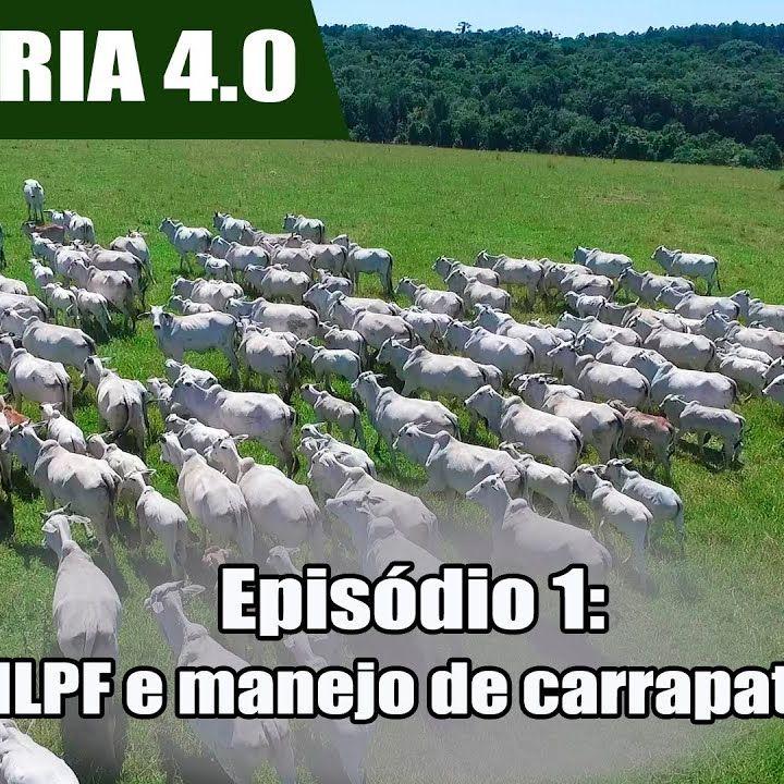 Websérie: Agropecuária 4.0 EP 01- Fazenda é exemplo de ILPF e manejo preventivo de parasitas