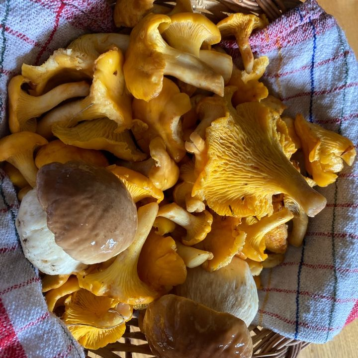 Mushroom season - Forestpod