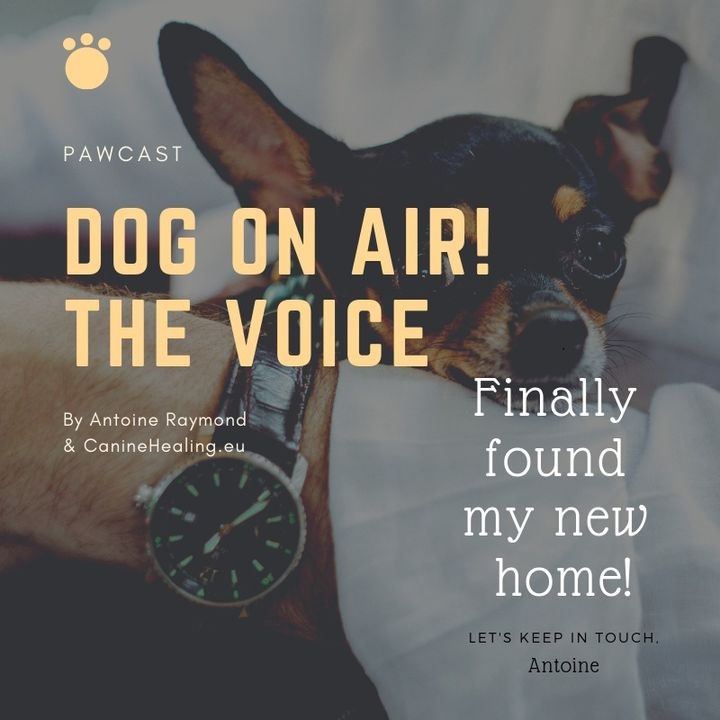 Episode 4: Follow me at    https://anchor.fm/dog-on-air