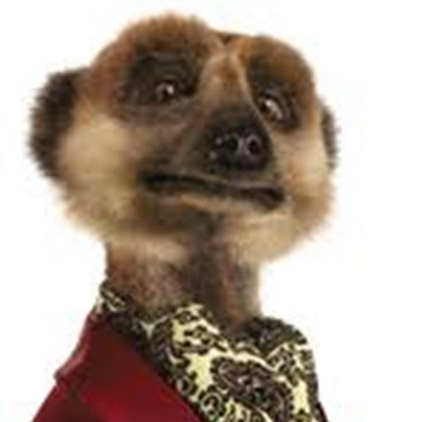 Interview With The Angry Meerkat As Man City Defeat Arsenal