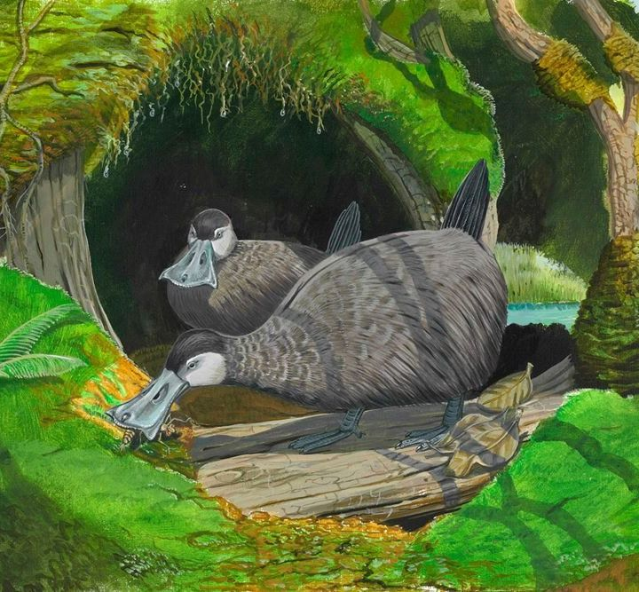 Recreating the Lost Worlds of the Past: From the Mauritius Dodo to the Blind Duck of Hawaiʿi