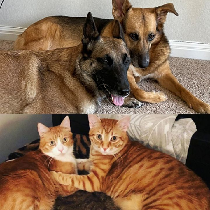 Life Is Better With Pets!