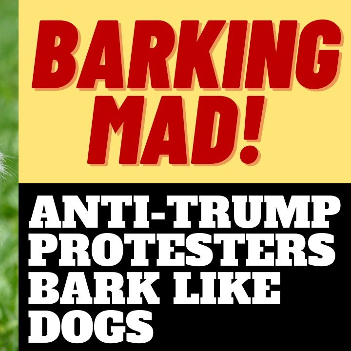 DERANGED ANTI-TRUMP PROTESTERS BARK LIKE DOGS