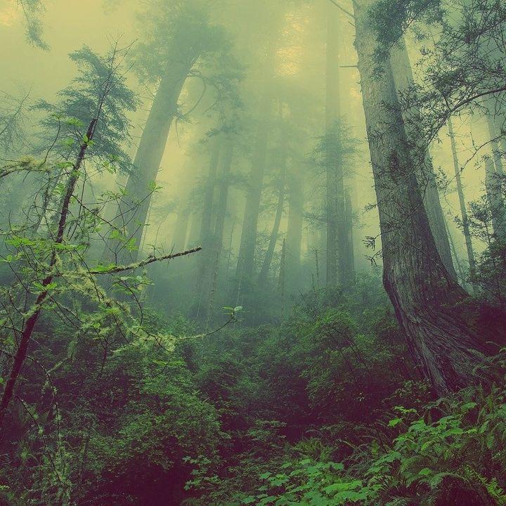 Un bosque sin maleza no es un bosque   el charco #26