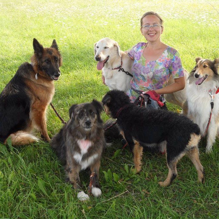 Live 17 Podcast DoggyBoom Jak zacząć samodzielny trening psa