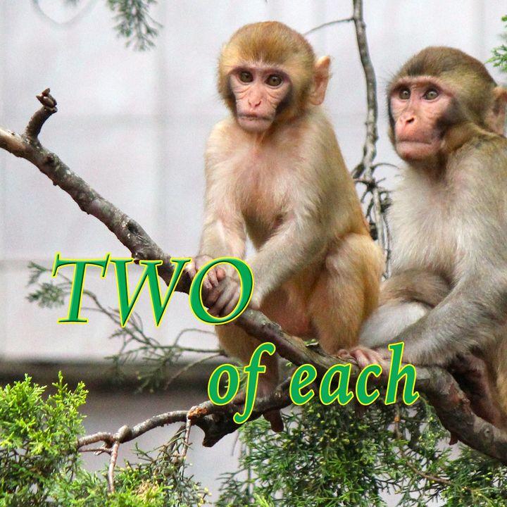 Two of Each, Genesis 6:17-22