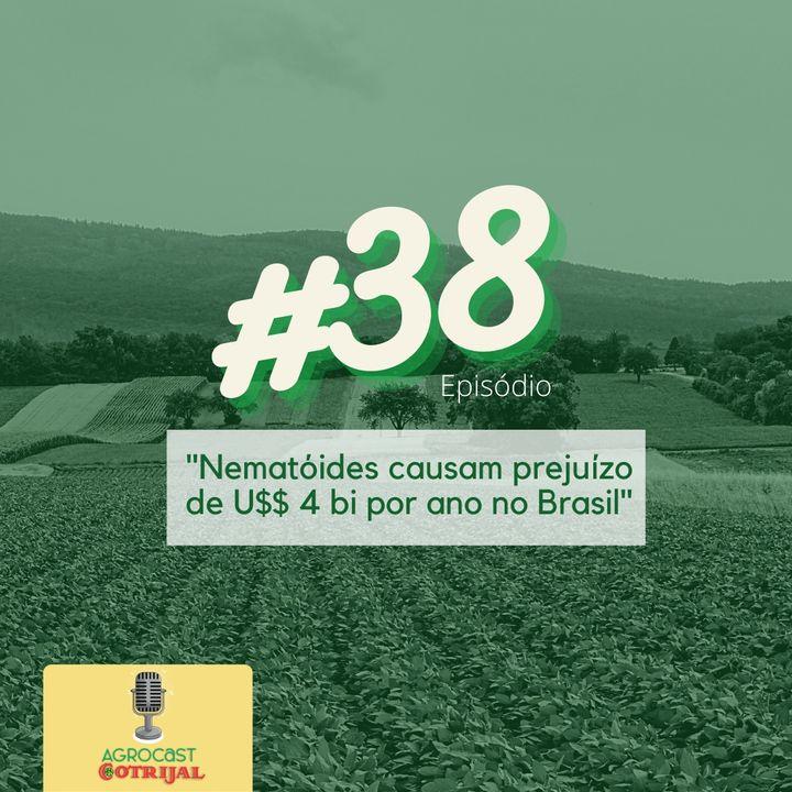 Nematóides causam prejuízo de US$ 4 bi por ano no Brasil