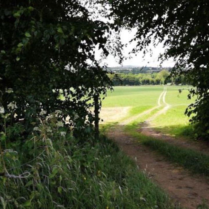 Farmview with Kieran O'Connor July 2nd.
