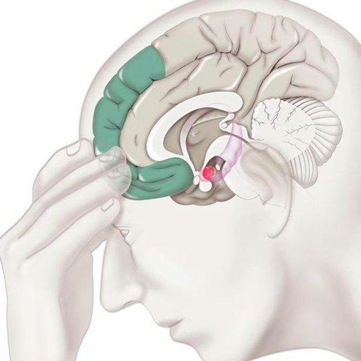 Dr. Eduardo Calixto: ¿Cómo funciona nuestro cerebro ante lo que estamos viviendo actualmente?