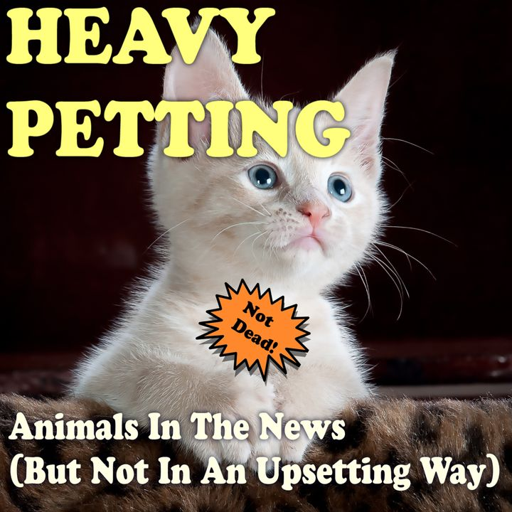 Heavy Petting with Wayne Resnick