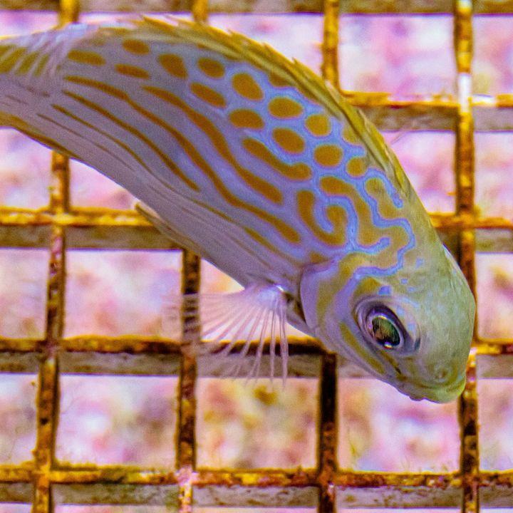 Stoa Scleractinia Ep3,  Part 4 How COVID-19 has affected Palau and BIOTA