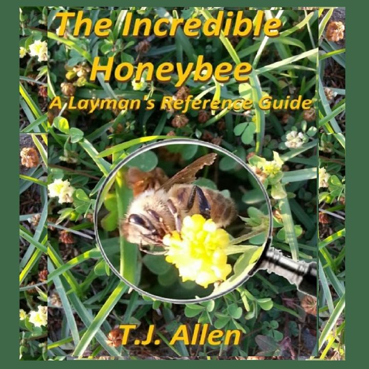 The Incredible Honey Bee: What a Designer