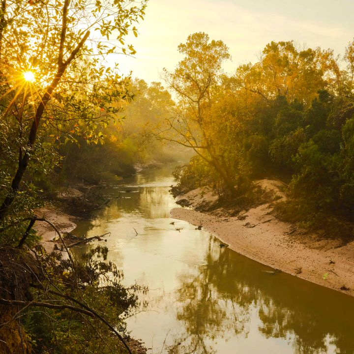5 Susan Chadwick of Save Buffalo Bayou: Taking Care of Our Local Bayous and Creeks and Why We Need Them Natural