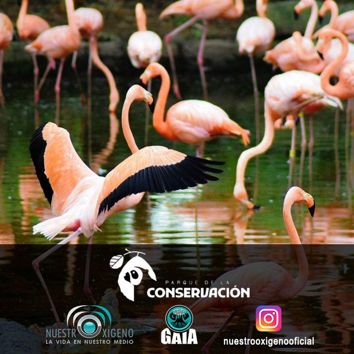 NUESTRO OXÍGENO Parque de la conservación - Lic. Gustavo Valencia