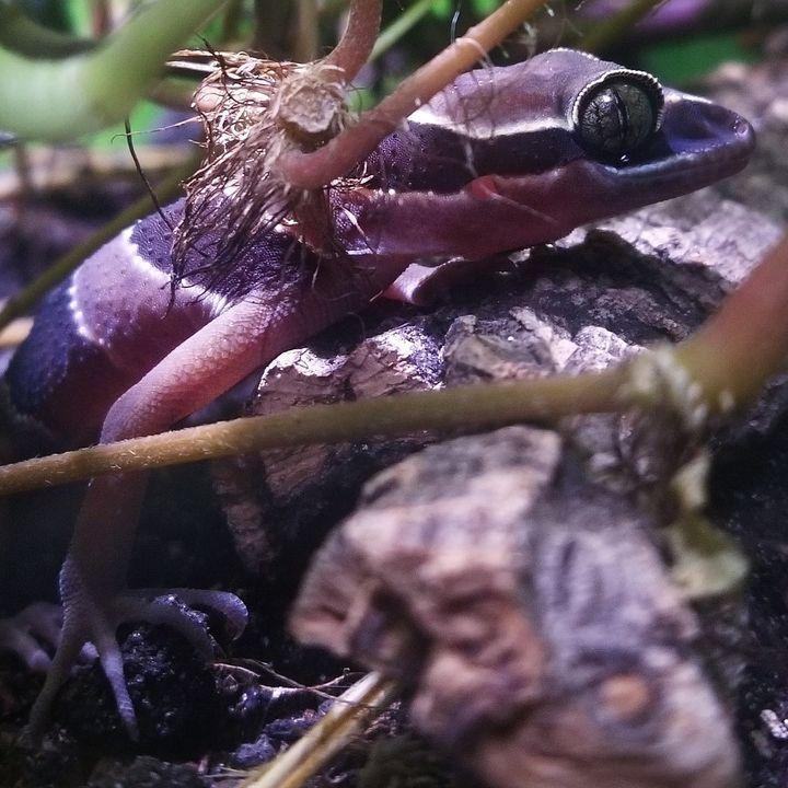 Episode 9: Clint Reinhart of Reinhart Reptiles!