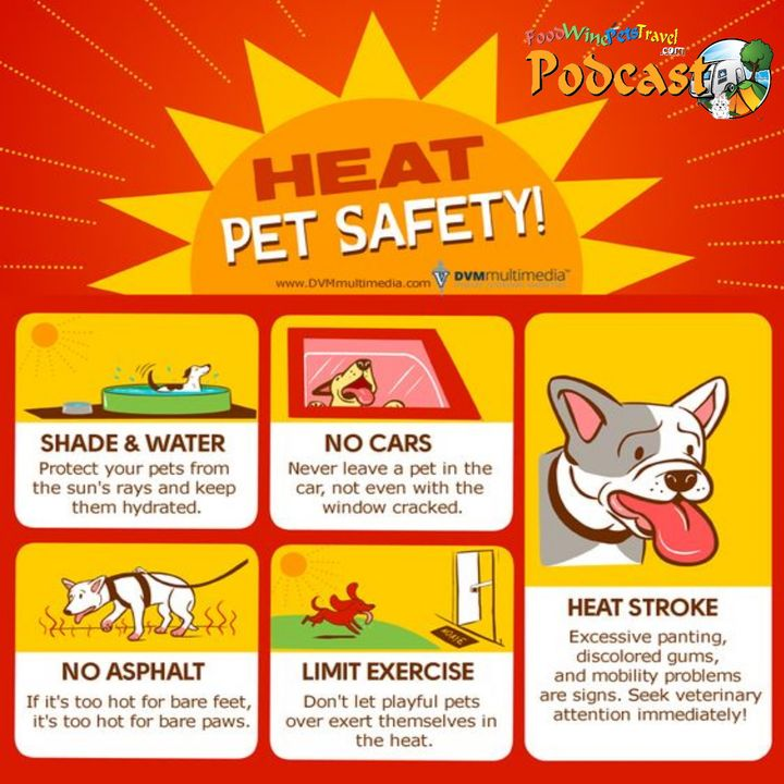 Dealing With Heat Affected Dogs - Dr Karyn Wesselingh