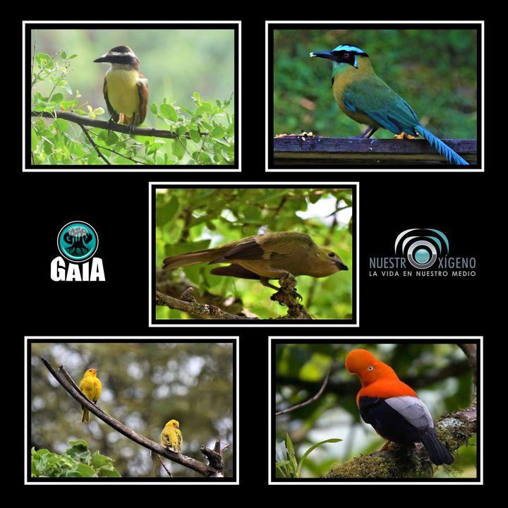 NUESTRO OXÍGENO Aves de ciudad - Ing. Natalia Ruiz Giraldo