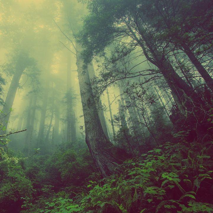 Joel Michalec Show 136: The Mist