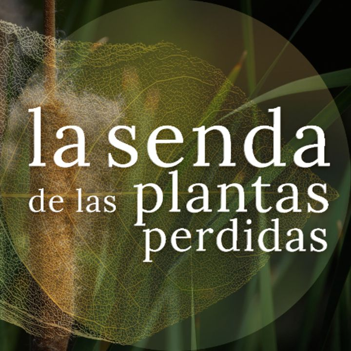 Fibras de agua, alimento ancestral: Typha spp. {La Senda de las Plantas Perdidas}