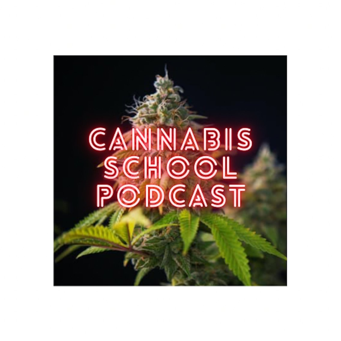 Cannabis School - Cover Image