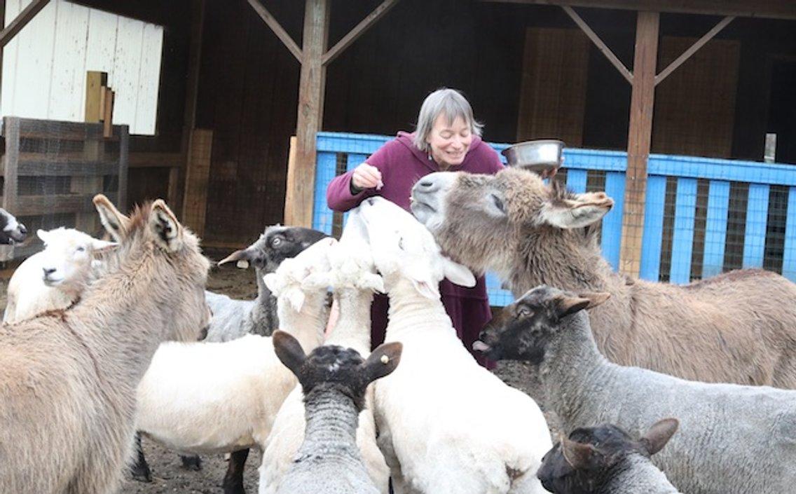 Katz and Wulf on Bedlam Farm - Cover Image